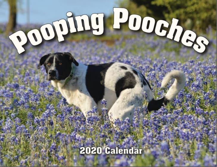 Pooping Pooches 2020 Wall Calendar.