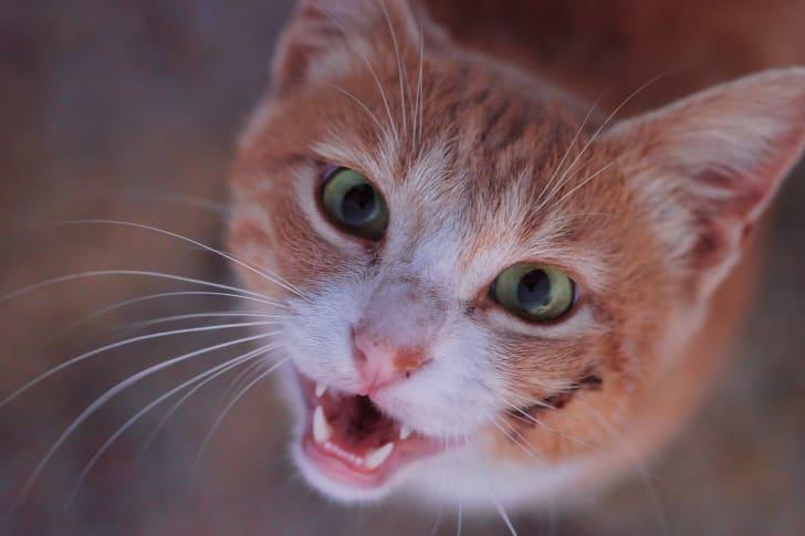 Cute cat smiling at the camera
