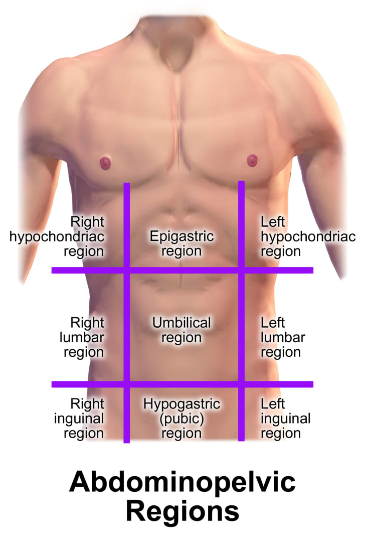 Abdominopelvic regions diagram