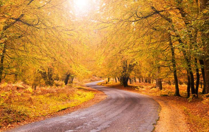 Sunlight on yellow fall foliage