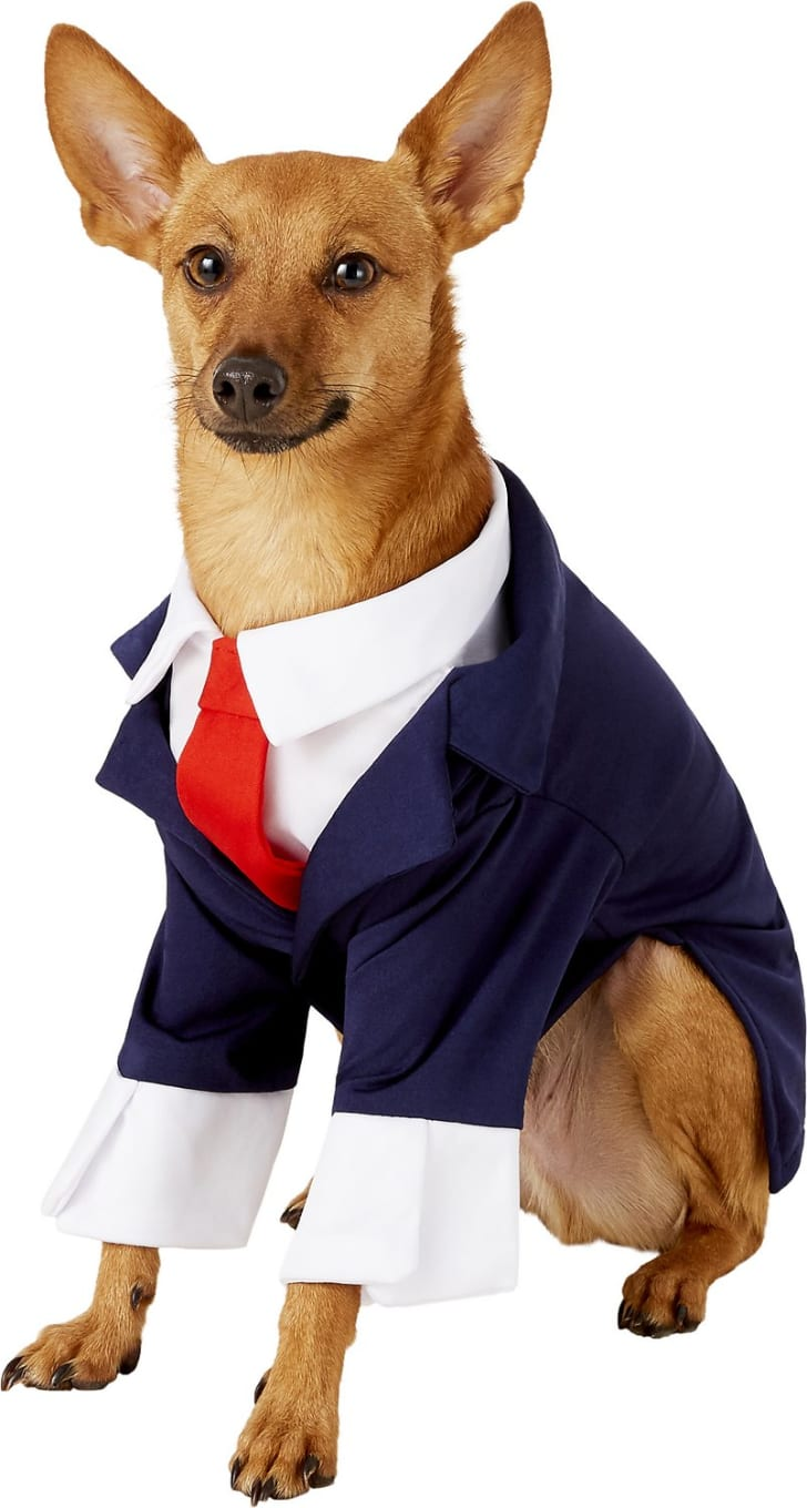 Business suit dog costume.