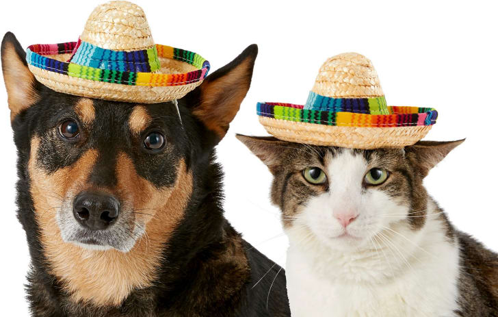 Cat and dog sombreros for Halloween 2019.