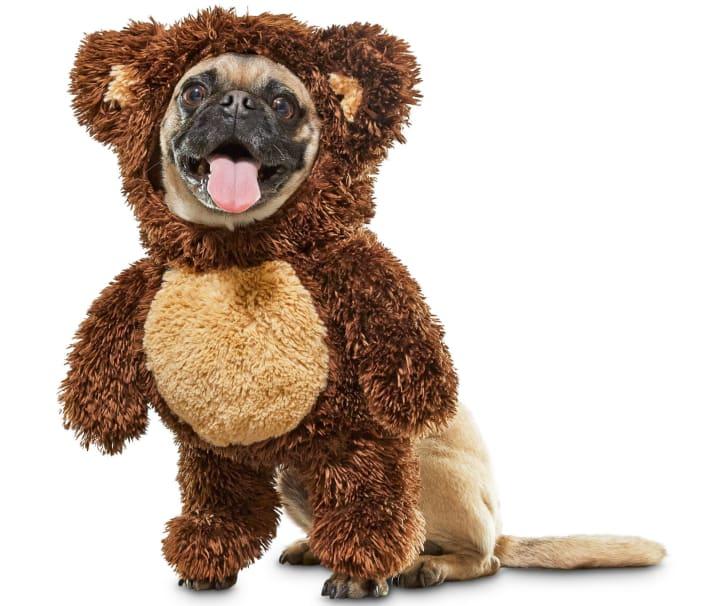 Teddy bear dog costume for Halloween 2019.
