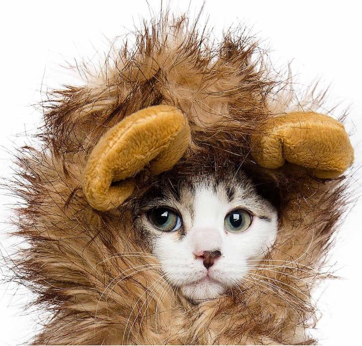 Lion mane cat costume.