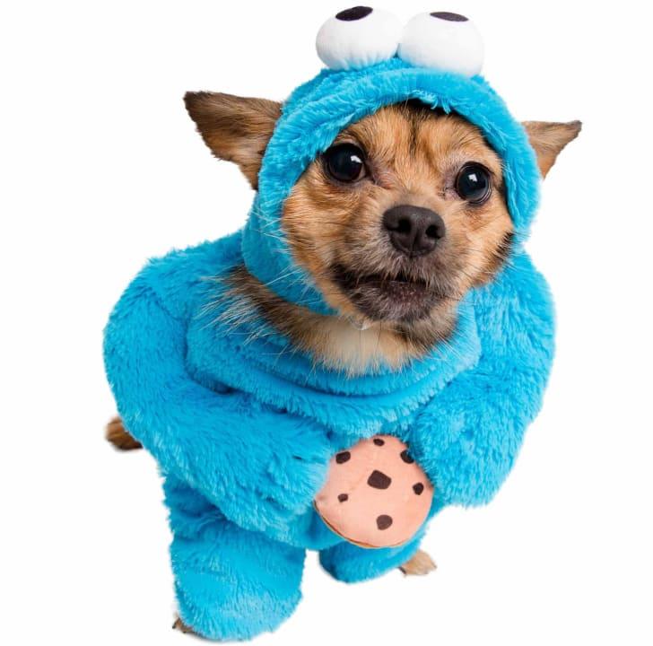 Best Pet Halloween Costumes. Cookie Monster Dog Costume.