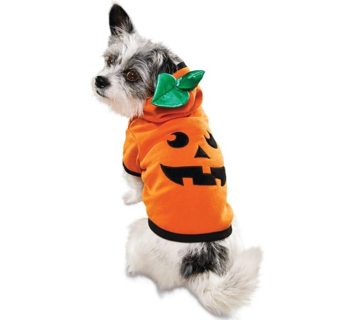 Best Pet Halloween Costumes. Pumpkin Jack o Lantern Costume.