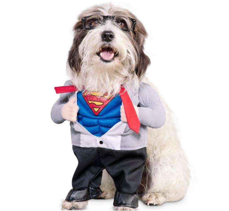 Best Pet Halloween Costumes. Superman Dog Costume.