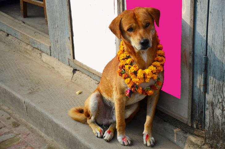Dog in Nepal during a fall festival