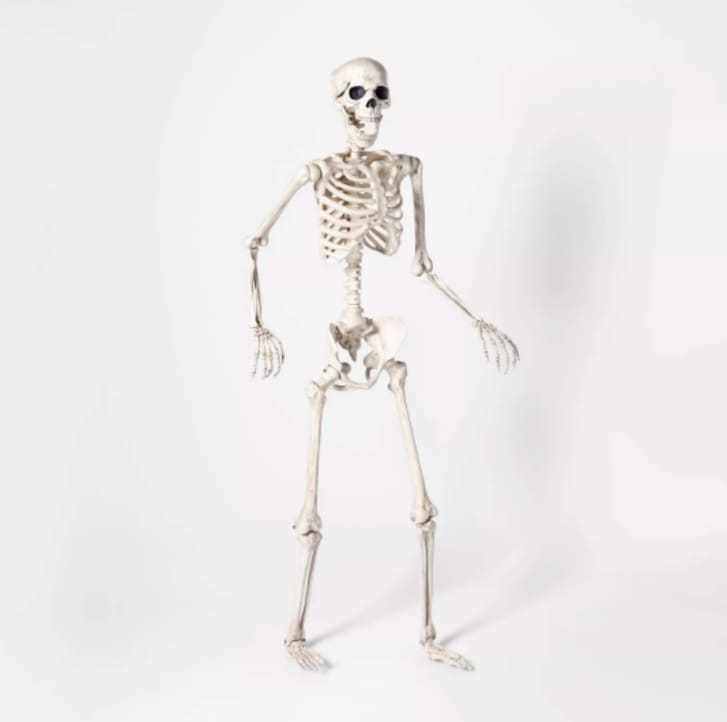 A poseable skeleton standing in front of a white background.