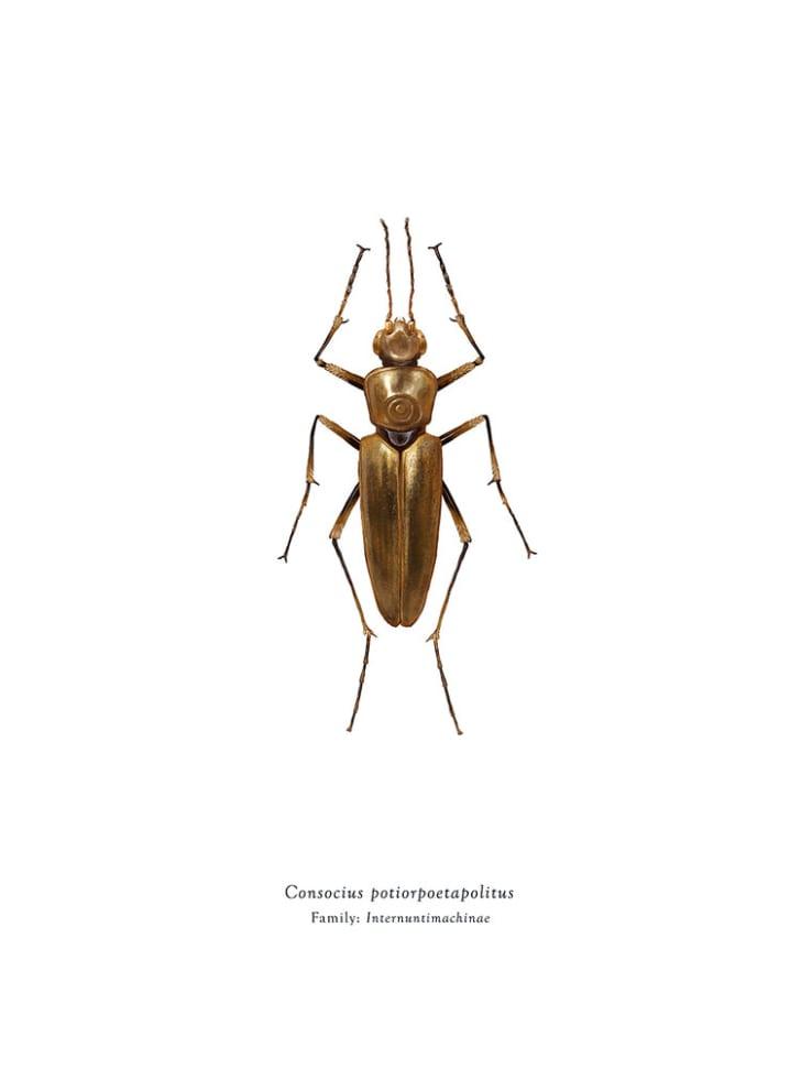 C3PO bug.