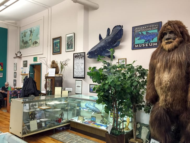 The interior of Maine's crytozoology museum.