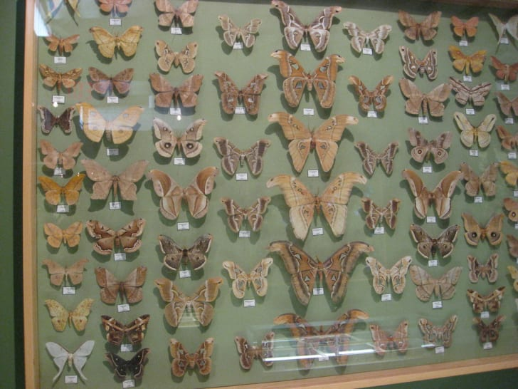 Moths at the Insectropolis in New Jersey