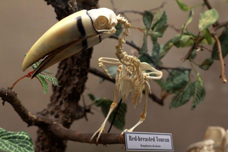 Museum of Osteology, Oklahoma City
