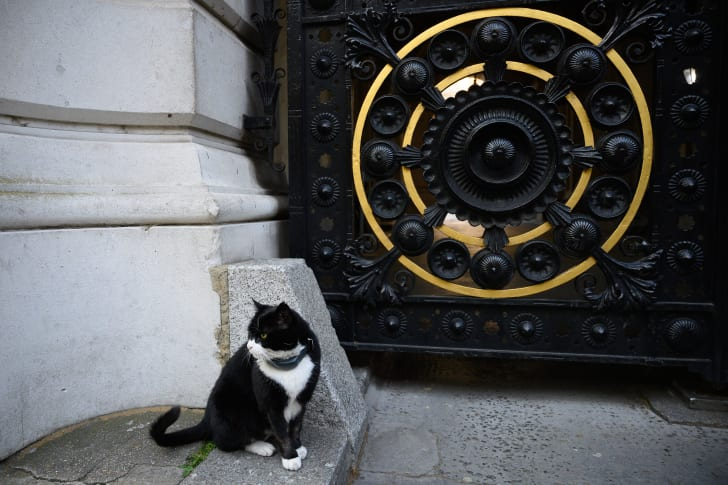 Palmerston, a black and white cat, sits outside a black and gold gate.