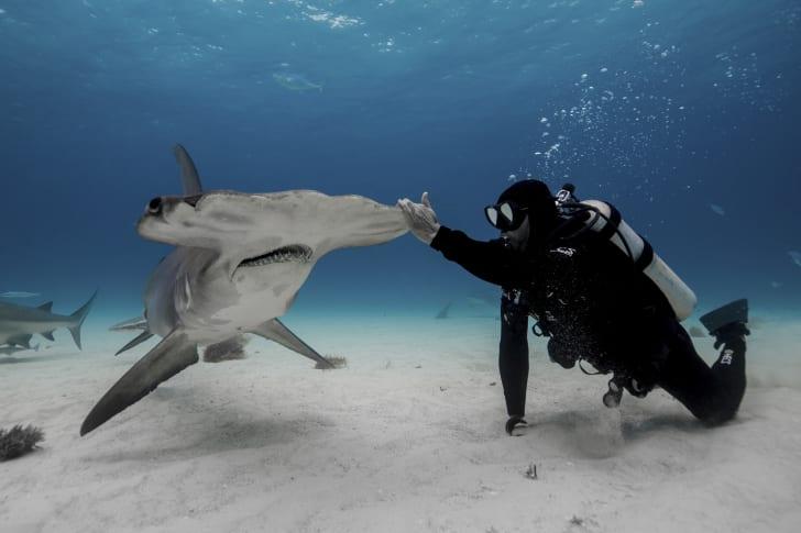 Paul de Gelder takes part in Shark Week