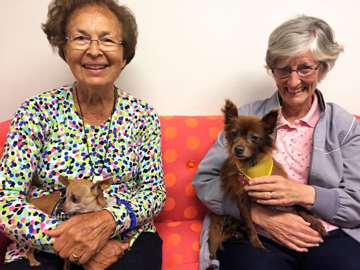 Two elderly women with dogs