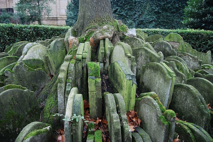 The Hardy Tree in London's St. Pancras churchyard