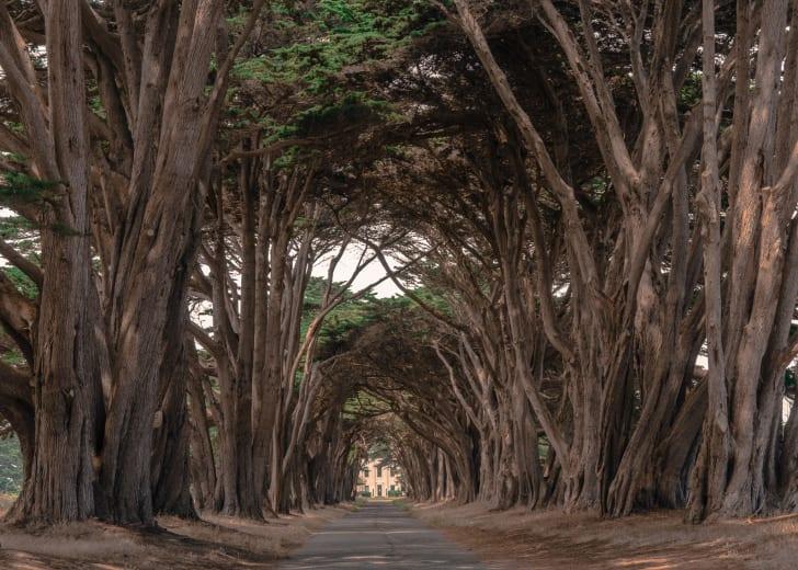 Cypress Tree Tunnel at Point Reyes National Seashore, CA