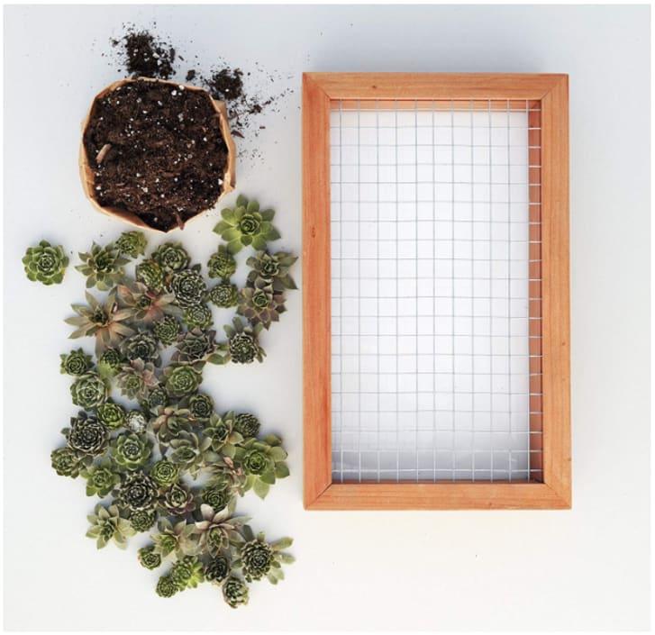 Succulent planter DIY kit