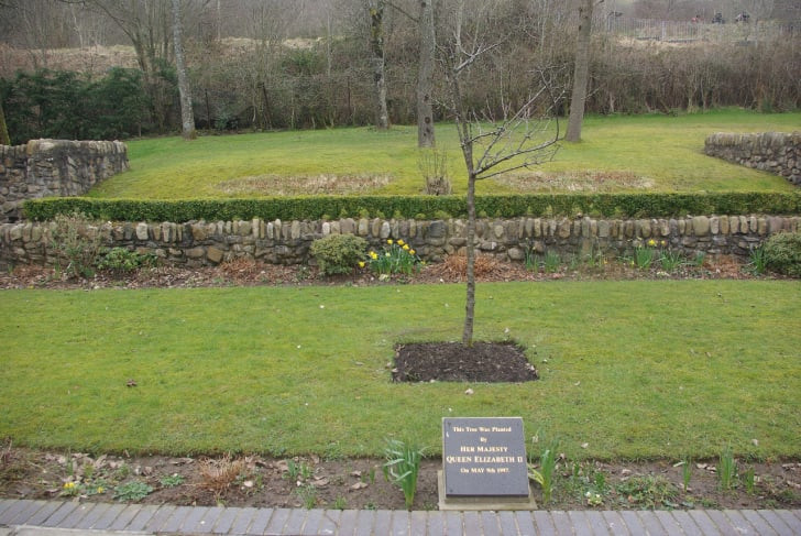 queen elizabeth II's tree at aberfan memorial garden