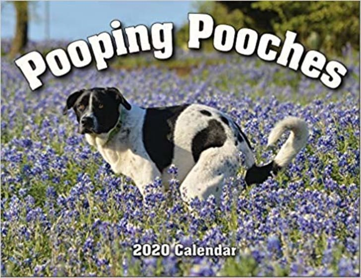 Image of the cover of a calendar, which features a black and white dog pooping in a field of lavender