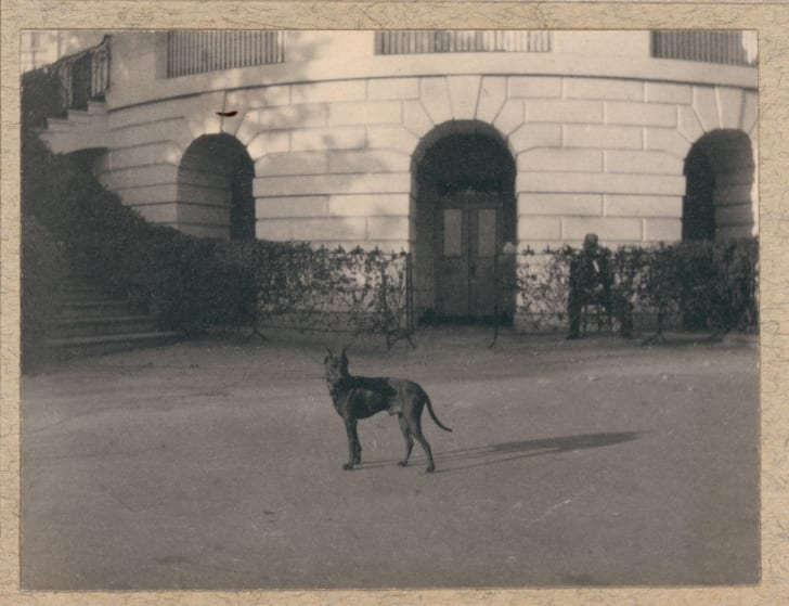 Jack the dog. 1902. Library of Congress Prints and Photographs Division. https://www.theodorerooseveltcenter.org/Research/Digital-Library/Record?libID=o282090. Theodore Roosevelt Digital Library. Dickinson State University