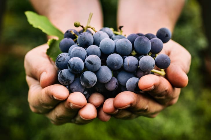 Farmer's hands with freshly harvested black grapes