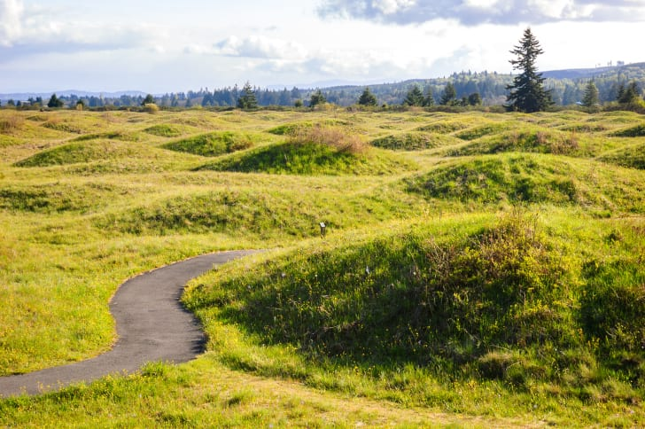 Mima Mounds in Washington