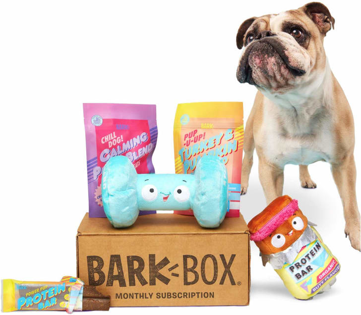 An adorable dog standing next to his/her BarkBox subscription