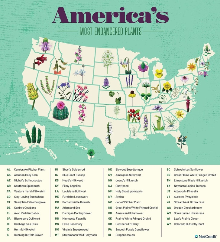 Map of most endangered plant species in each state.