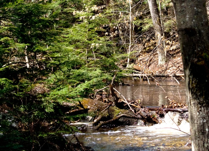Bear Brook State Park.