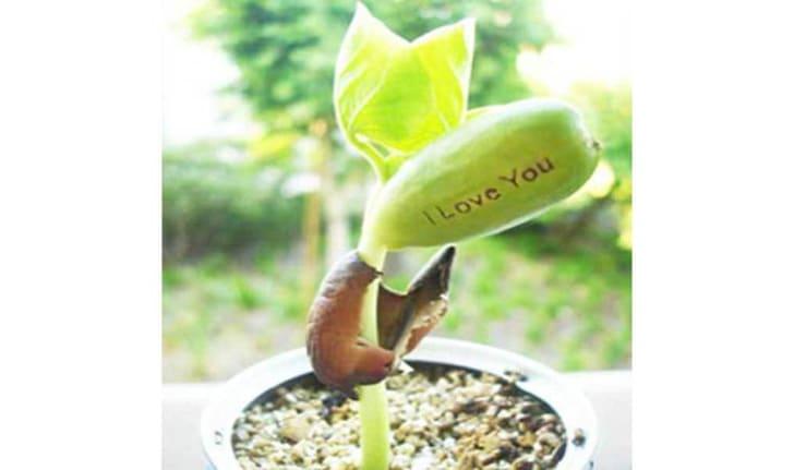 Magic Bean Plant from Walmart.