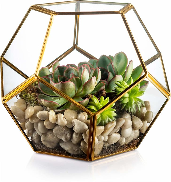 Glass terrarium on sale on Amazon.