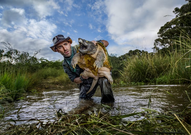 Coyote Peterson with a gigantic snapping turtle