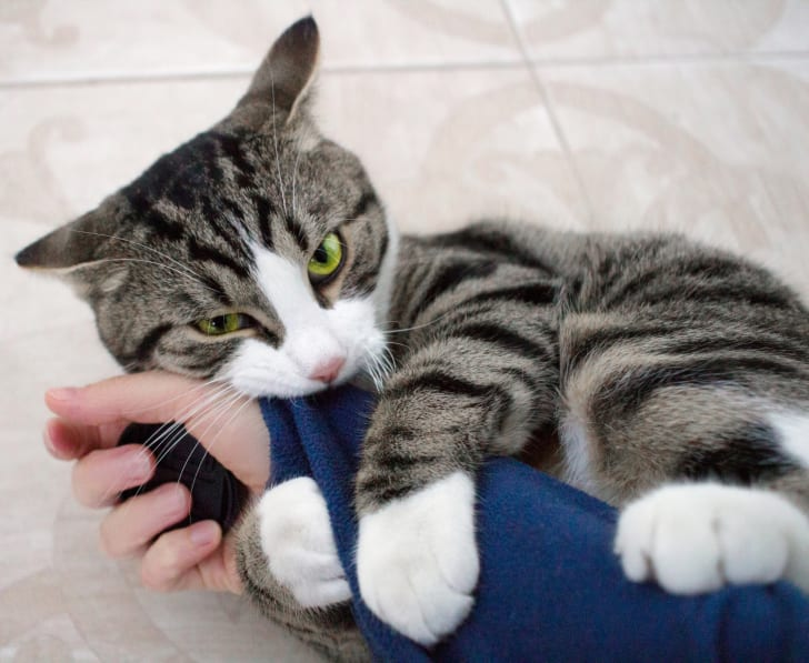 A cat biting its owner's arm.