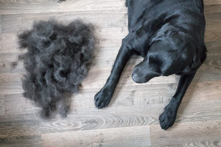 A dog next to a pile of dog hair.