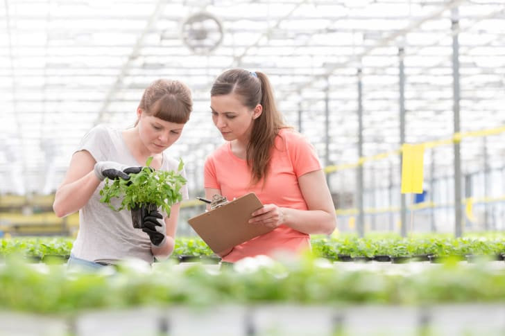 Confident female botanists discussing over seedlings in plant nursery