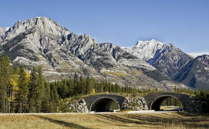 Wildlife crossing in Banff National Park