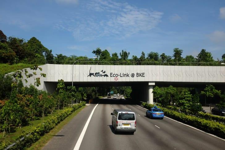 Animals crossing in Singapore