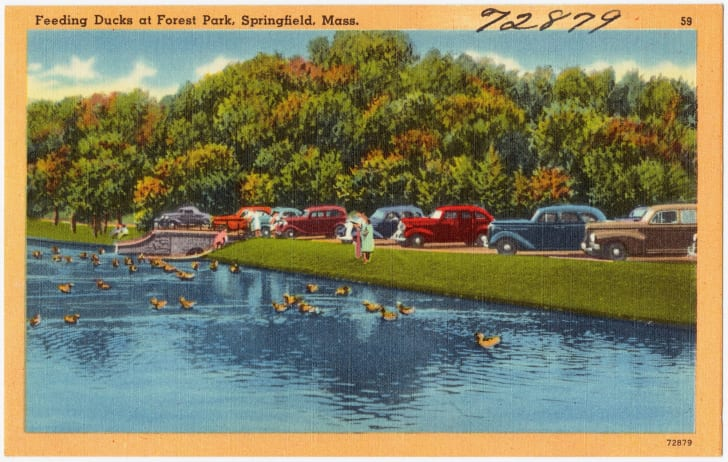 Postcard shows people feeding the ducks at Forest Park