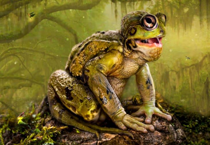 Artist's illustration of Loveland Frog.