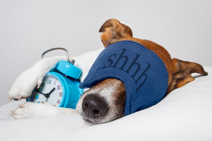 A dog wearing an eye mask sleeps next to an alarm clock