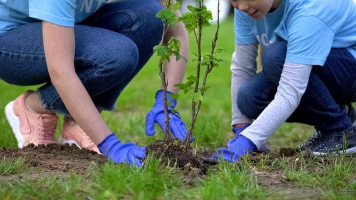 People planting a tree.