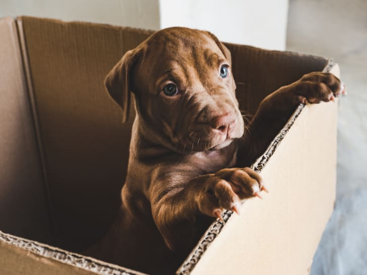 Puppy in a box.