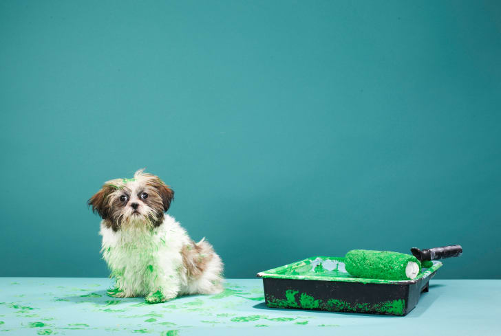 A dog covered in green paint.