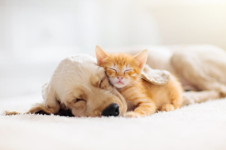 A puppy sleeping with a kitten.