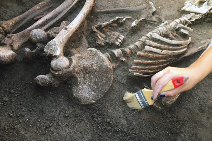 Bones at an excavation site.