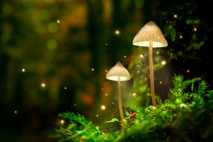 Fairy mushrooms.