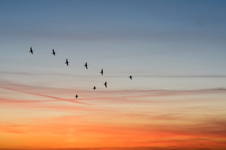 Birds flying in a v-shape.