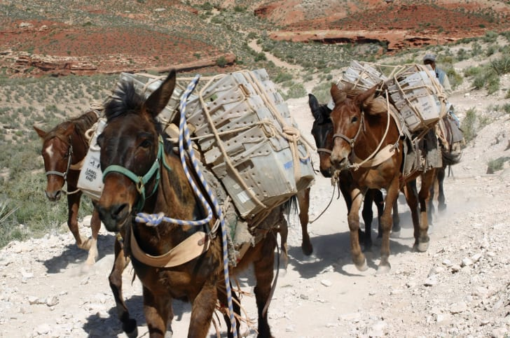 Equines carrying mail